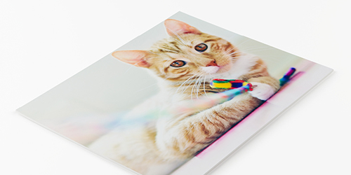 Kitty playing with a toy on a Double-weight Matboard Photo Print