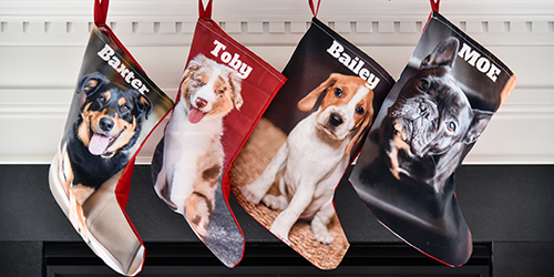 Three dogs on Three Custom Stockings
