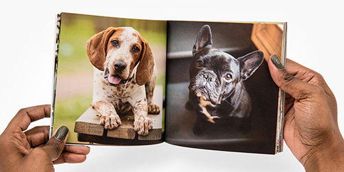 Two dogs in a Custom Buzz Book Photo Album