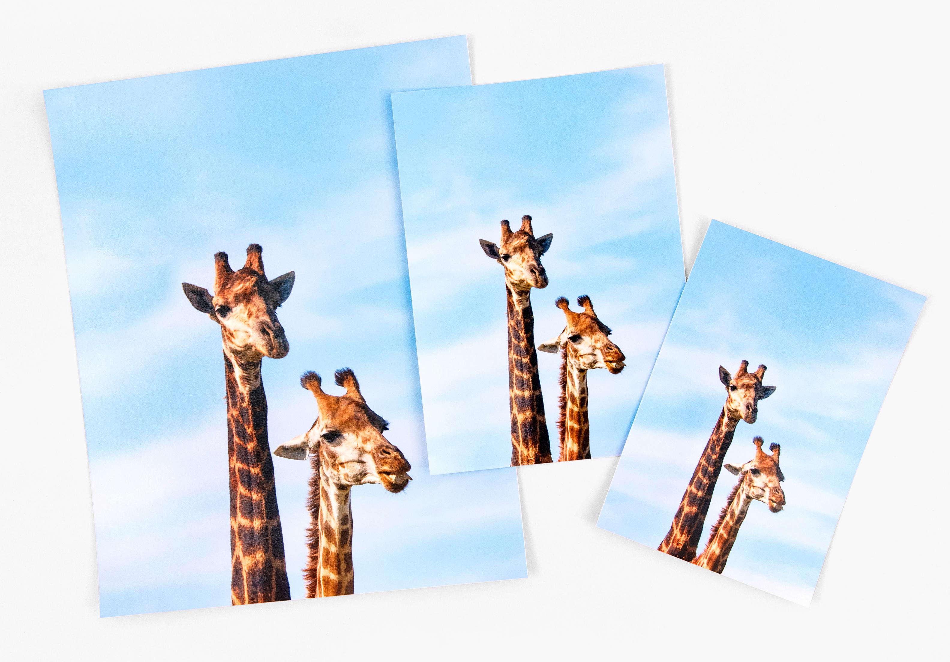 Professional Prints - Photo Printing - Nations Photo Lab