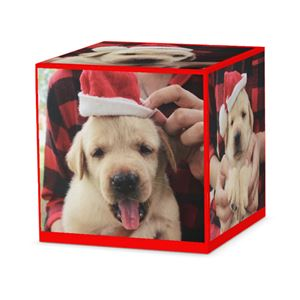 Pet puppy wearing Santas hat on a custom red cube